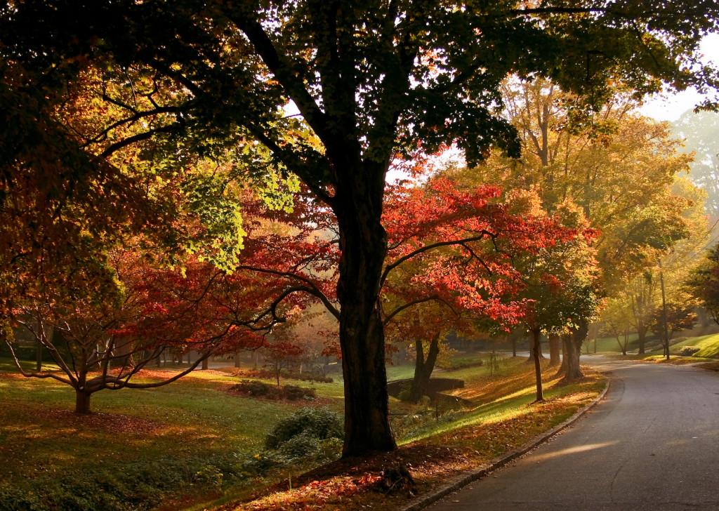 Brian Leon   Runnymede Park